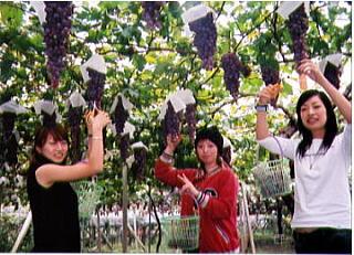 5-grape-01.jpg