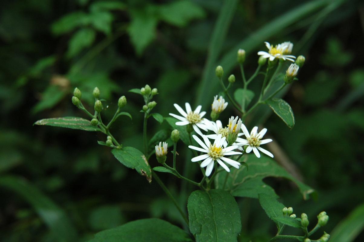 仲間が多い花で名前があってますか?