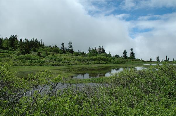 高野池湿原