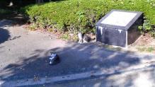 偵察猫と援護猫の分隊。