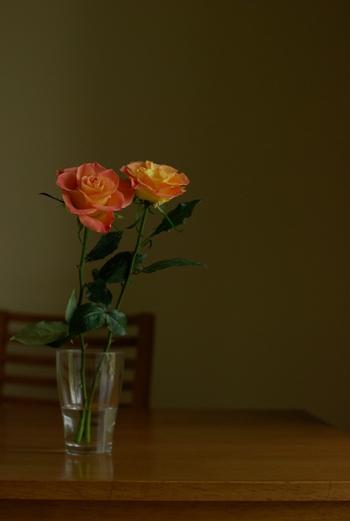 薔薇撮り練習1