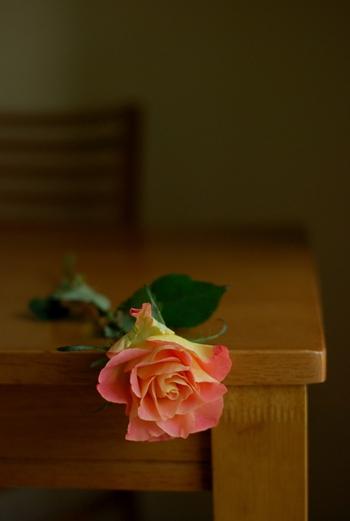 薔薇撮り練習2