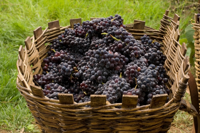 「約束の葡萄畑 あるワイン醸造家の物語」画像