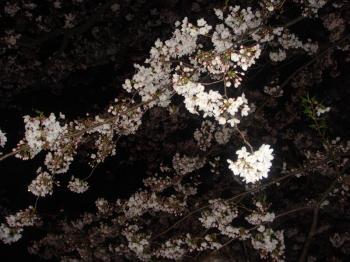 20090413_04.jpg