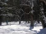 樹林帯の中を歩く