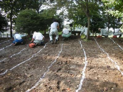球根植え替え作業
