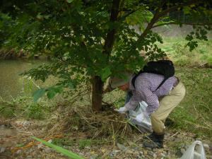 木の根方に引っ掛かるごみ