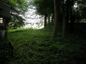 境内の草原