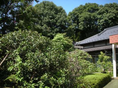 町田家の屋敷林