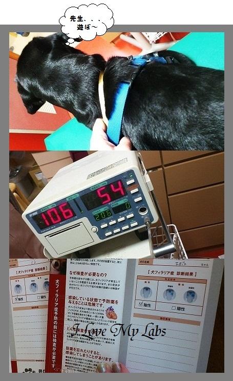 DSC_1887 (2)Check-up 2012