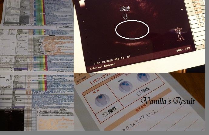 DSC_1858 (2) Check-up 2012