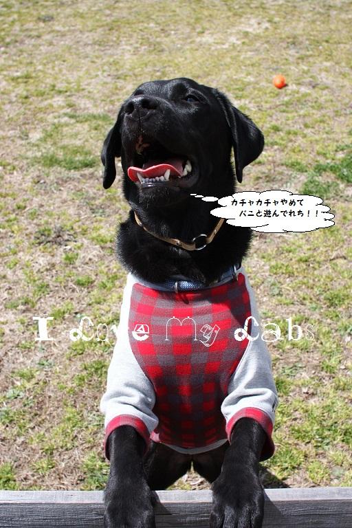 IMG_8328 (2)Camp April 2012