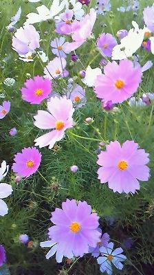 秋の花ですな