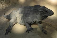 rhino_iguana.jpg