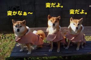 10_20081228024511.jpg