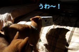 10_20090115202449.jpg