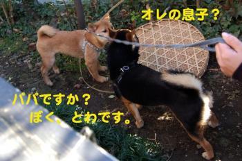 10_20090202012722.jpg