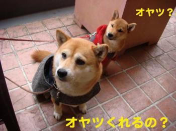 10_20090209234413.jpg