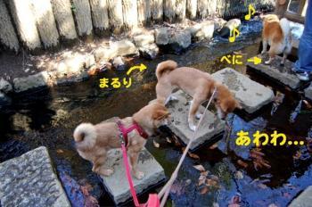 10_20090218171510.jpg