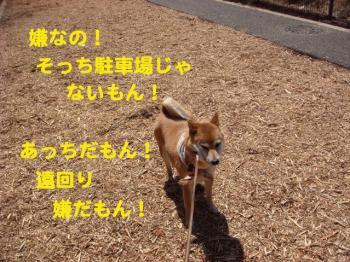 10_20090409214419.jpg