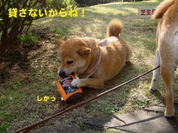 10_20090420082209.jpg
