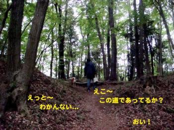10_20090425205339.jpg