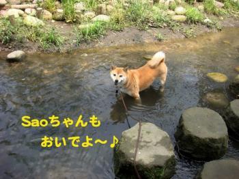 10_20090621093836.jpg