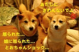 11_20081228013837.jpg