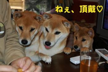 11_20090124211137.jpg