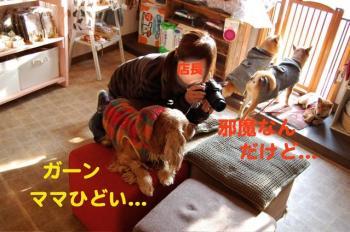 11_20090129030004.jpg