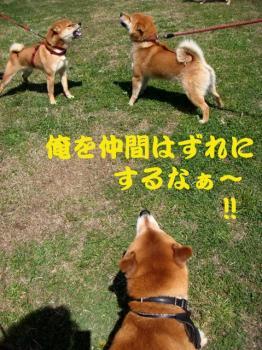 11_20090404215948.jpg