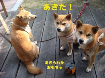 11_20090420082747.jpg