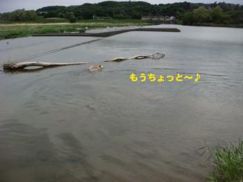 11_20090513230824.jpg