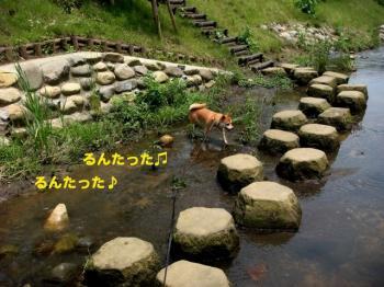 11_20090621094734.jpg