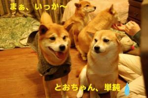 12_20081228014003.jpg