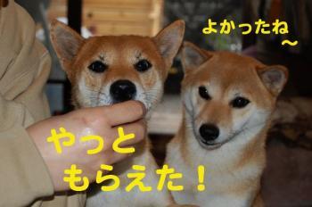 12_20090124214455.jpg