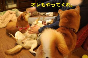 12_20090326000611.jpg