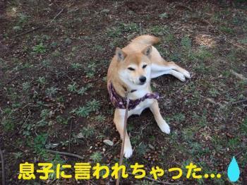12_20090406021447.jpg