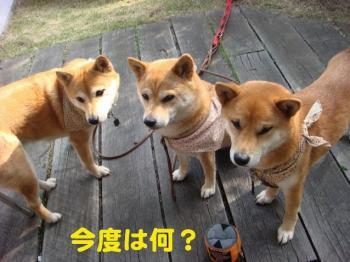 12_20090420083417.jpg