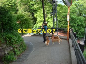 12_20090519091542.jpg