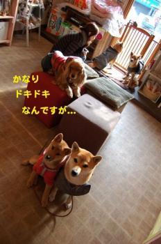 13_20090129025627.jpg