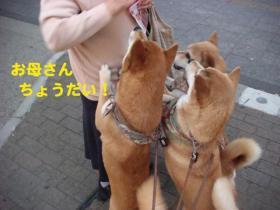 14_20090513004954.jpg