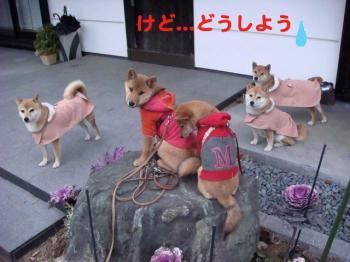 15_20090211225849.jpg