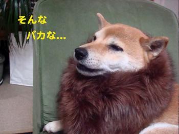 15_20090222022550.jpg