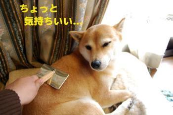 15_20090308004127.jpg