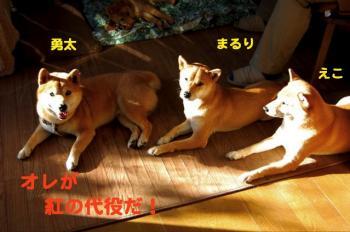 16_20090202110613.jpg