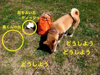 16_20090404223632.jpg
