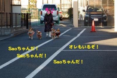 17_20090115231334.jpg