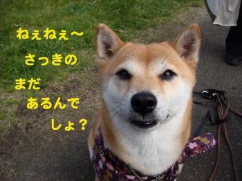 19_20090329174810.jpg