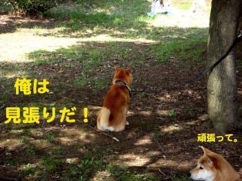 19_20090406224531.jpg